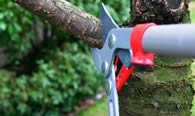 Tree Pruning Services in Sarasota FL