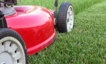 Lawn Care in Sarasota FL Lawn Care Services in Sarasota FL Quality Lawn Care in Sarasota FL
